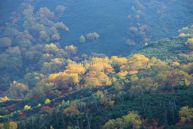 乗鞍岳の紅葉の写真素材 [FYI04021207]