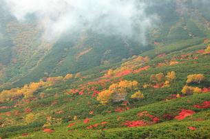 乗鞍岳の紅葉の写真素材 [FYI04021209]