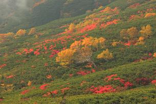乗鞍岳の紅葉の写真素材 [FYI04021210]
