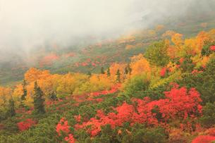 乗鞍岳の紅葉の写真素材 [FYI04021211]