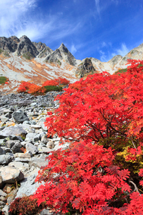ナナカマドの紅葉と涸沢槍の写真素材 [FYI04021237]