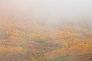 ガスに包まれる乗鞍岳の紅葉の写真素材 [FYI04021275]