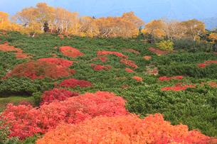 乗鞍岳の紅葉の写真素材 [FYI04021281]