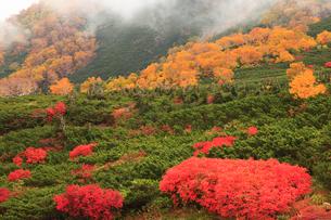 乗鞍岳の紅葉の写真素材 [FYI04021282]