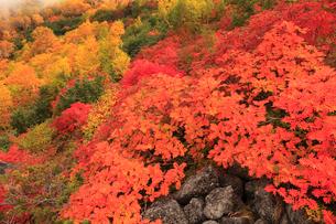 乗鞍岳の紅葉の写真素材 [FYI04021286]
