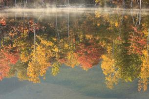 紅葉のまいめの池の写真素材 [FYI04021344]