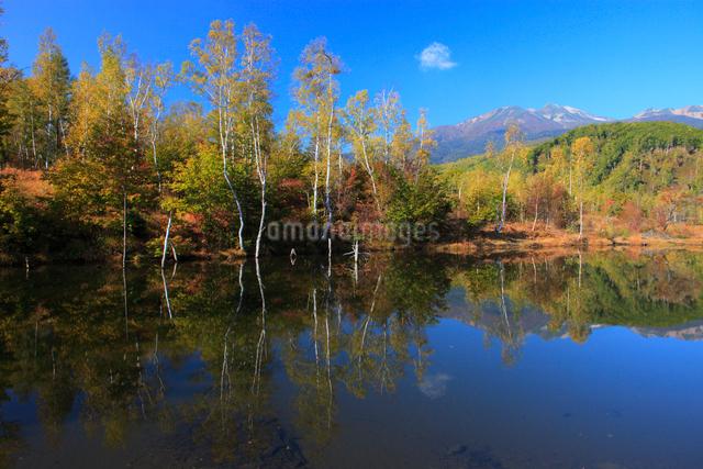 紅葉のまいめの池と乗鞍岳の写真素材 [FYI04021347]