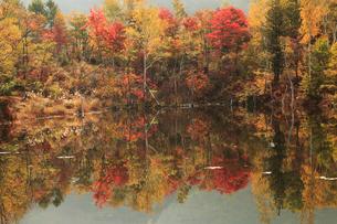 紅葉のまいめの池の写真素材 [FYI04021349]