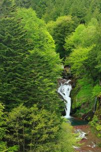 新緑のおしどり隠しの滝の写真素材 [FYI04021440]