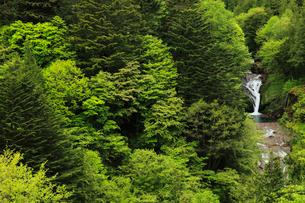 新緑のおしどり隠しの滝の写真素材 [FYI04021442]