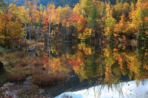 紅葉のまいめの池の写真素材 [FYI04021448]