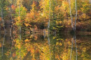 紅葉のまいめの池の写真素材 [FYI04021449]