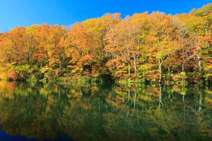 鎌池の紅葉の写真素材 [FYI04021461]