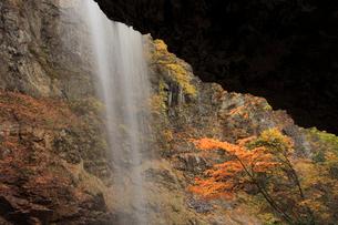 紅葉の雷滝の写真素材 [FYI04021485]