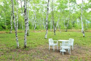 新緑の白樺林とテーブルセットの写真素材 [FYI04021539]
