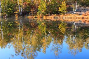 紅葉のまいめの池の写真素材 [FYI04021573]