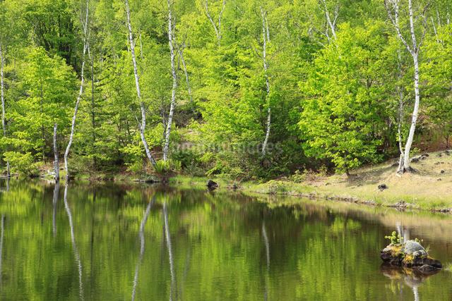 新緑のまいめの池の写真素材 [FYI04021575]