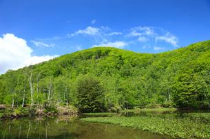 新緑のあざみ池の写真素材 [FYI04021577]