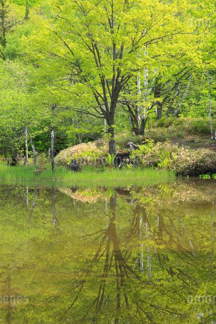 新緑のあざみ池の写真素材 [FYI04021578]