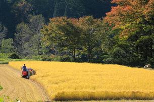 稲刈り機での稲刈りの写真素材 [FYI04021660]