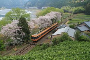 桜と大井川鉄道の電車の写真素材 [FYI04021756]