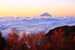 雲海と富士山の写真素材 [FYI04022198]