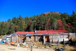 紅葉と南御室小屋の写真素材 [FYI04022233]