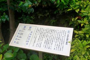 井伊家歴代墓所の写真素材 [FYI04022352]