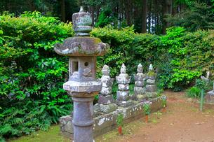 井伊家歴代墓所の写真素材 [FYI04022384]