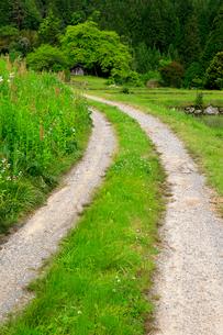 道と柿の木と小屋の写真素材 [FYI04022416]