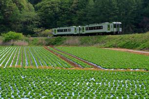 高原野菜畑と小海線の写真素材 [FYI04022478]