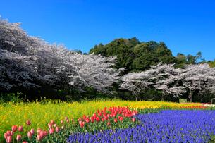 花畑と桜の写真素材 [FYI04022623]