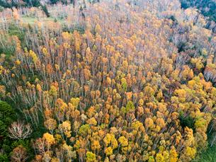 志賀高原の紅葉した樹林 ドローン空撮の写真素材 [FYI04022898]