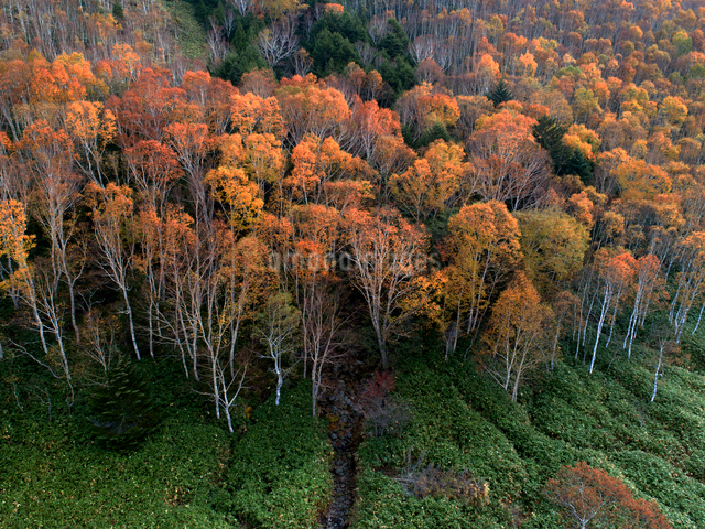 志賀高原 黄葉の平床の写真素材 [FYI04022899]