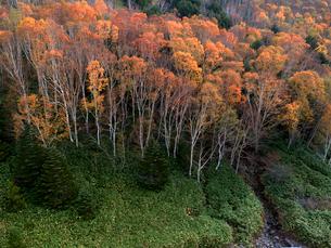志賀高原 黄葉の平床 の写真素材 [FYI04022900]