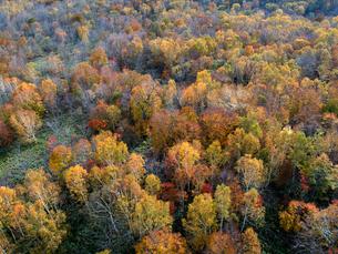志賀高原の黄葉した樹林 ドローン空撮の写真素材 [FYI04022903]