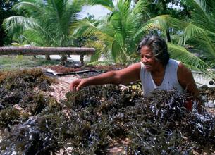 輸出品の海草を干すの写真素材 [FYI04023485]