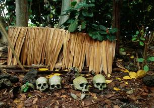 先祖の頭骸骨の写真素材 [FYI04023486]