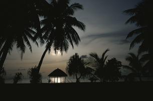 ヤシの木とパンダナス 8月 キリバス共和国の写真素材 [FYI04023556]