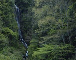 鹿落ちの滝 来谷峡の写真素材 [FYI04023721]
