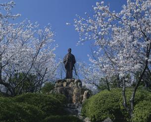 桜と高杉晋作像の写真素材 [FYI04023736]