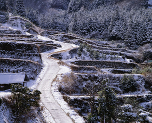 雪の棚田の写真素材 [FYI04023755]
