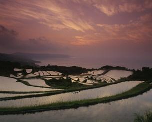 棚田の夕景の写真素材 [FYI04023766]