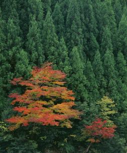 秋の樹々 表匹見峡の写真素材 [FYI04023782]