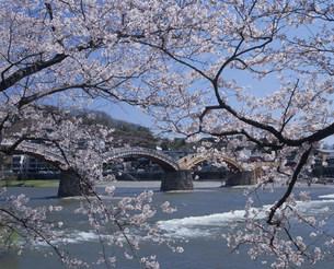 錦帯橋と桜の写真素材 [FYI04023811]