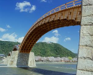 錦帯橋と桜の写真素材 [FYI04023814]