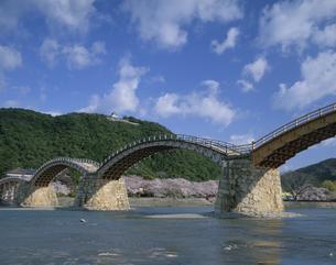 錦帯橋と桜 岩国市の写真素材 [FYI04023821]