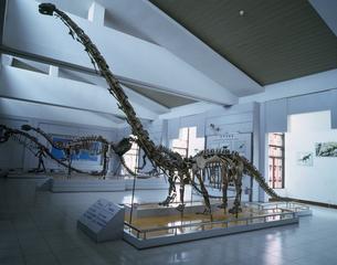 恐竜化石 四川省自貢産 昆明市博物館内展示の写真素材 [FYI04025178]