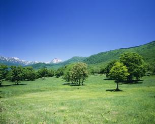 初夏の妙高高原笹ヶ峰牧場の写真素材 [FYI04025957]
