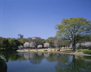 桜咲く北の丸公園の写真素材 [FYI04025960]
